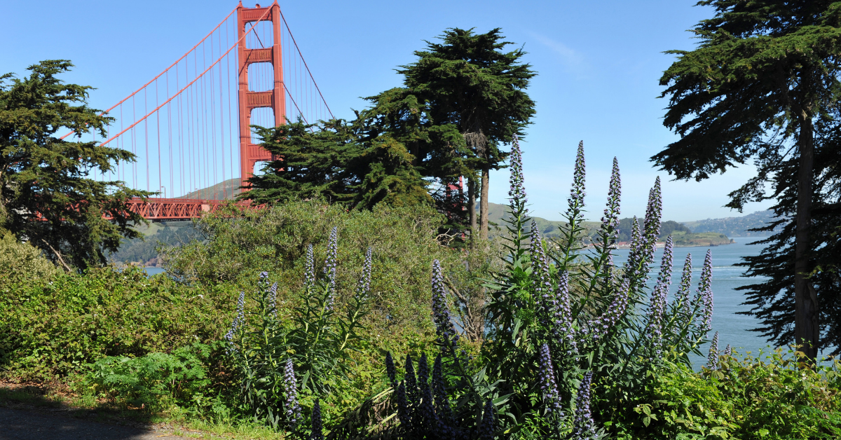 The Golden Gate Park with trees and view to the bridge