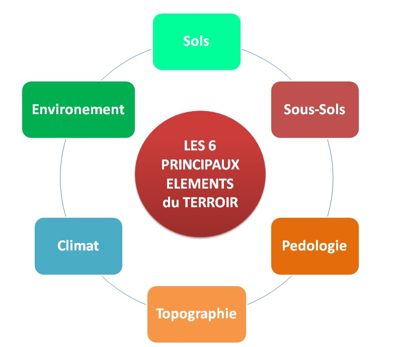 Les 6 Principaux elements du terroir by LeDomduVin (v3).jpg