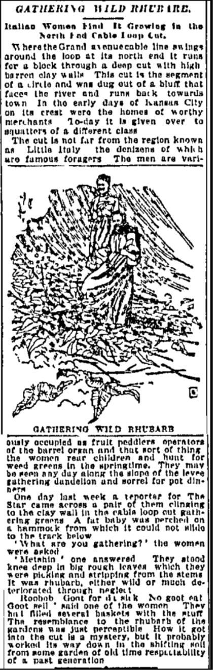 "Kansas City Star article ""Gathering Wild Rhubarb"" from 1897."