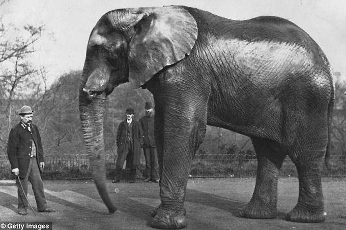 North London Zoo