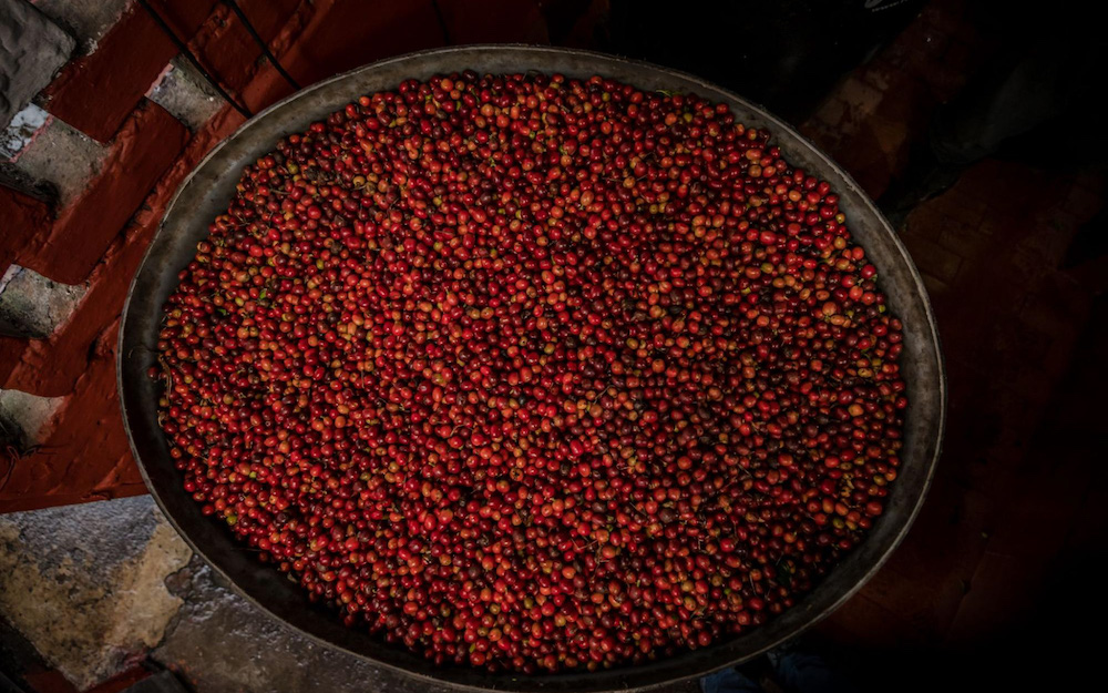 coffee cherries in a bowl