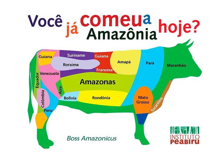 desmatamento, floresta, agropecuária, carne