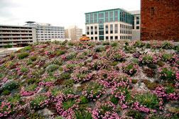 ASLA Blooms