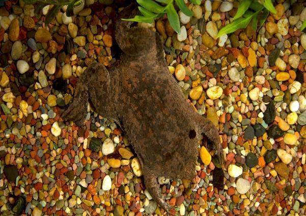 C:\Users\Name\Pictures\hero_surinam_toad_animals.jpg