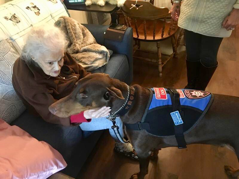 animals and seniors on hospice