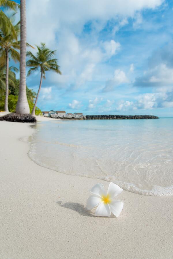 foto de uma flor na areia da praia