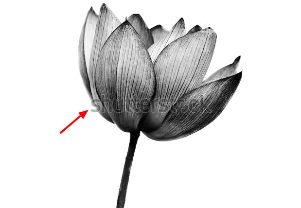 contoh image dengan watermark