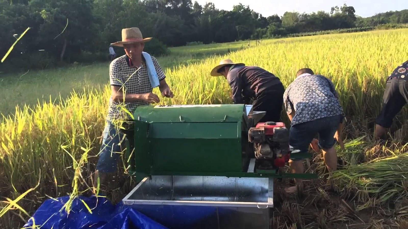 Máy nông nghiệp mini – Bạn đồng hành cùng nhà nông trên mọi nẻo đường.