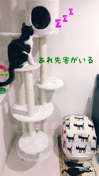 猫は高い所が好きなのはなぜ?高い場所が好きな理由