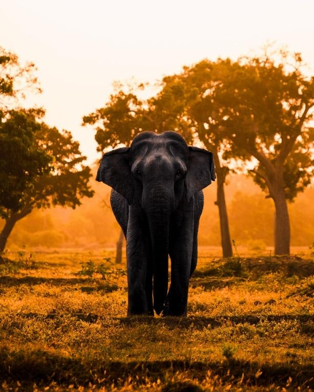 black elephant surrounded by trees