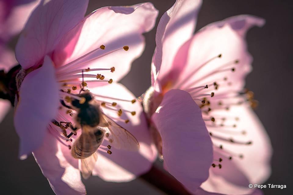 La imagen puede contener: flor, planta, naturaleza y exterior