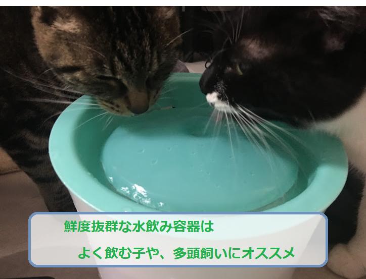 簡単ごはんレシピと猫の手作りご飯に必要な栄養バランスとは