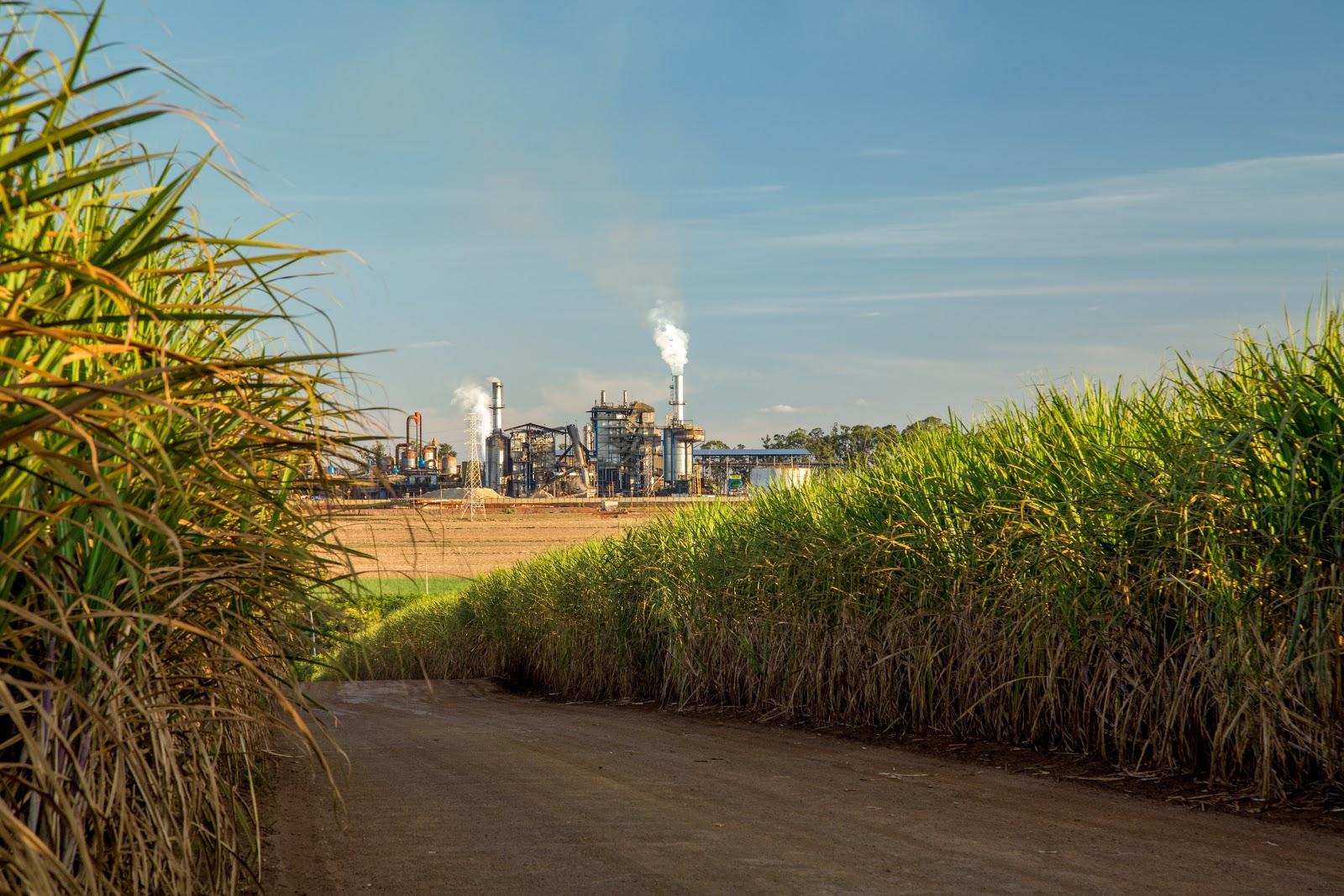 Safra 20/21 de cana-de-açúcar global pode ser atingida por problemas climáticos no continente europeu, o que favorece o agronegócio brasileiro. (Fonte: Shutterstock)