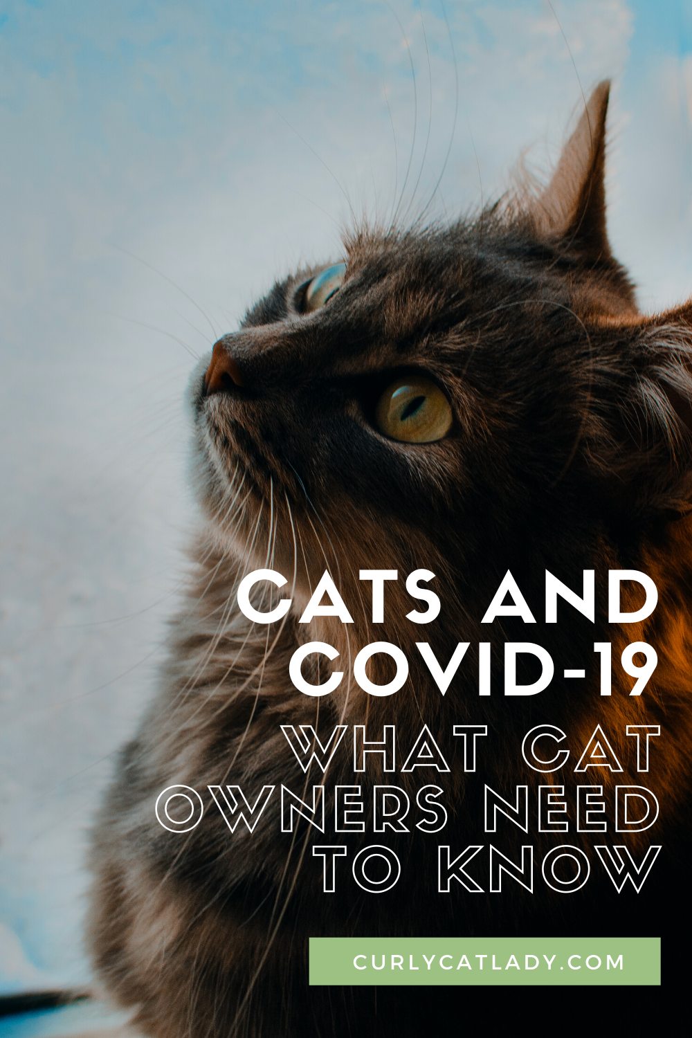 cats and covid-19: what cat owners need to know