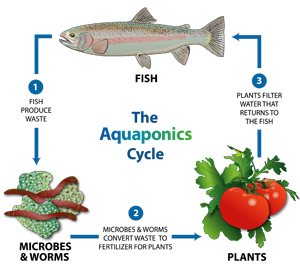 Afbeeldingsresultaat voor aquaponics