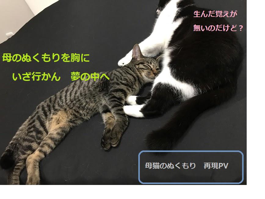 猫が腕枕で寝る理由とは?飼い主の腕に顔を乗せる心理