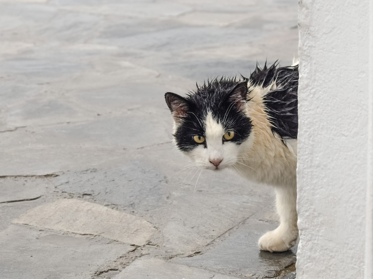 stray cat visiting? What does it mean and what should you do.