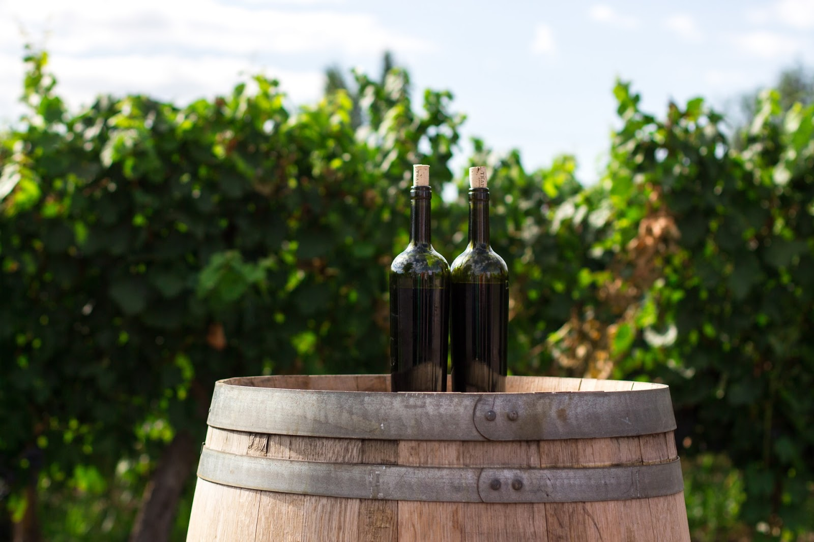 Spanish Wine Vocabulary Terms South American Regions