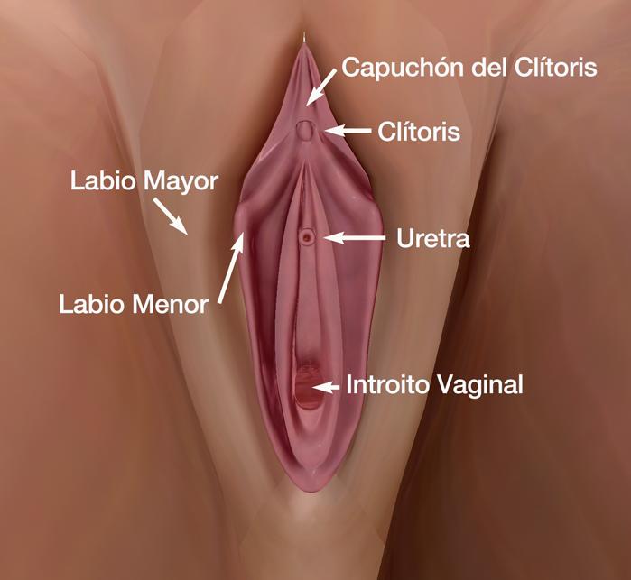 Sabes dónde está tu clítoris? Aquí te decimos cómo encontrarlo y estimularlo
