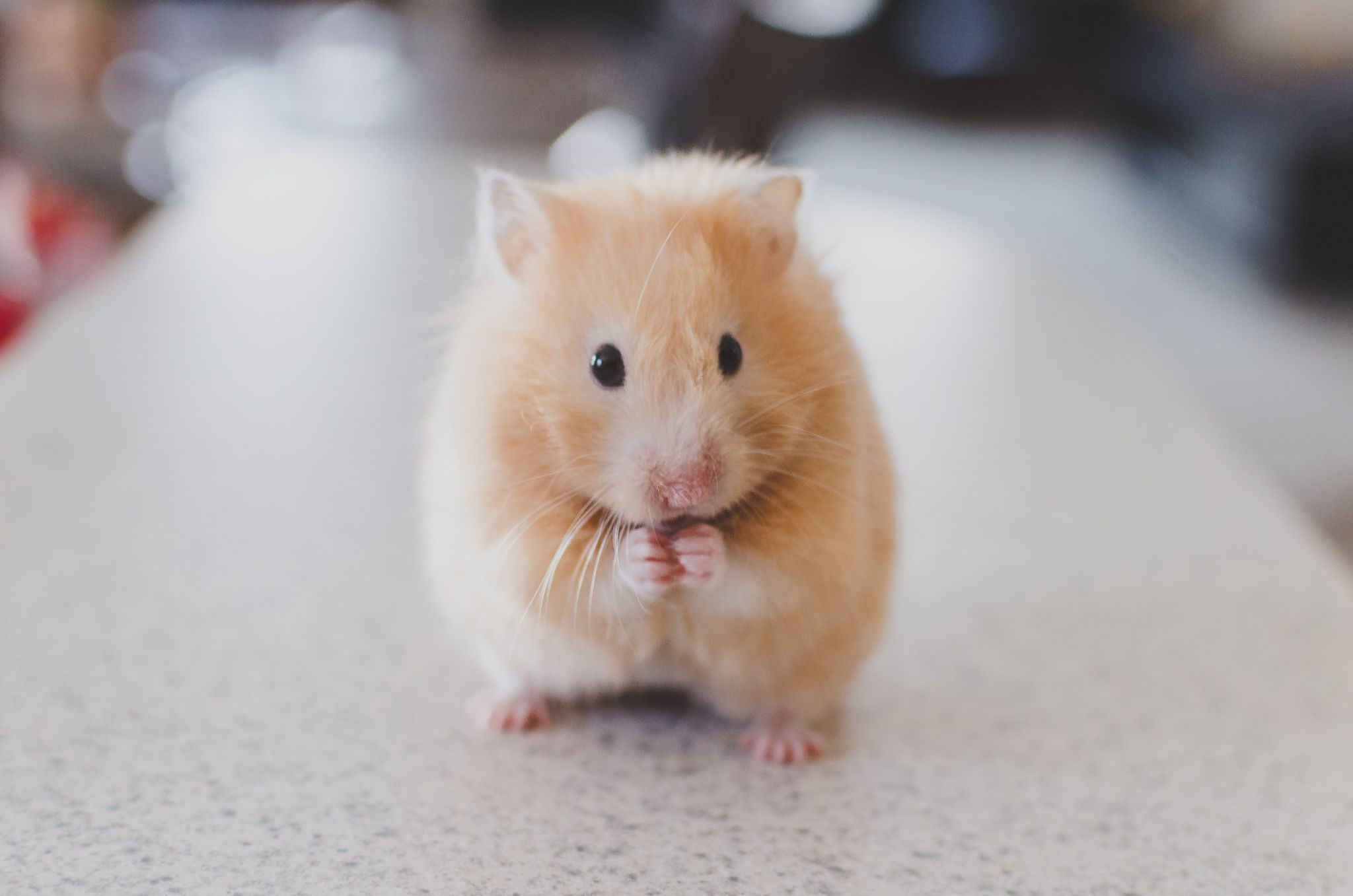 Lectures on the pros and cons of animal testing at Manchester University, The Manc