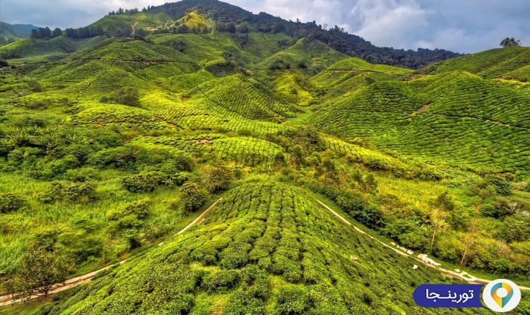 ارتفاعات کامرون پاهانگ در مالزی