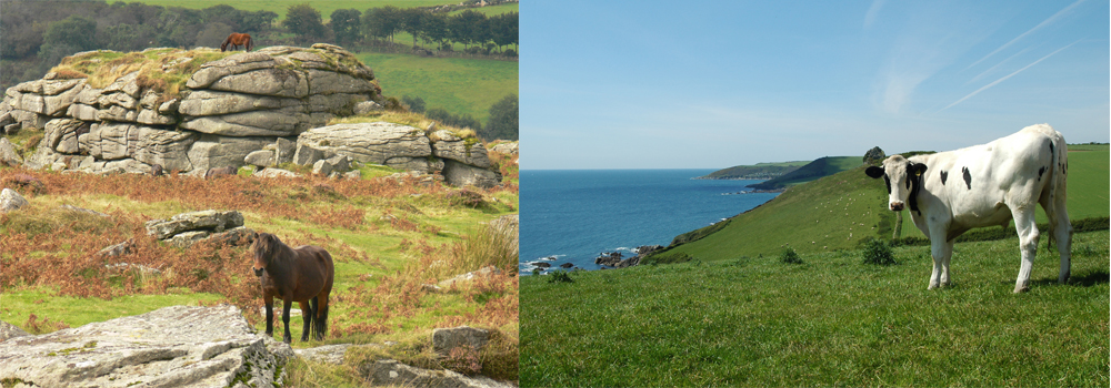 Walk across stunning countryside when you book direct with Devon Farm Holidays.