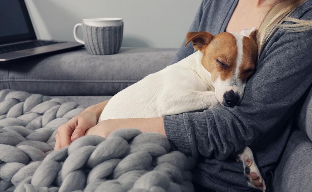 dog sleeping on its owner