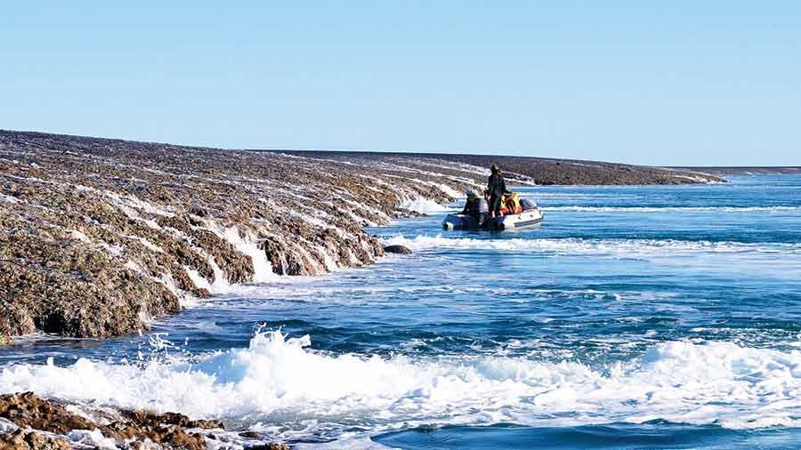 Image result for montgomery reef photo