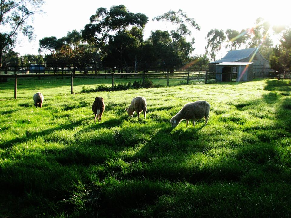 100 things to do in melbourne with kids bundoora park childrens farm