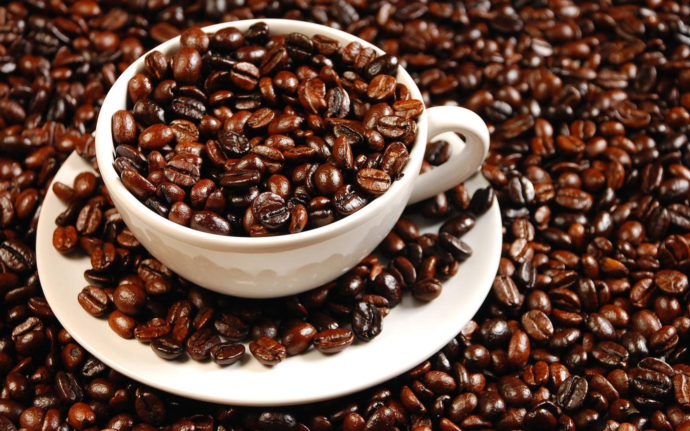 Hạt cà phê nguyên chất chứa hàm lượng caffein cao