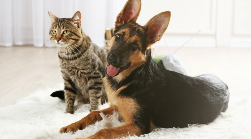 A cat and a dog happily sitting together.