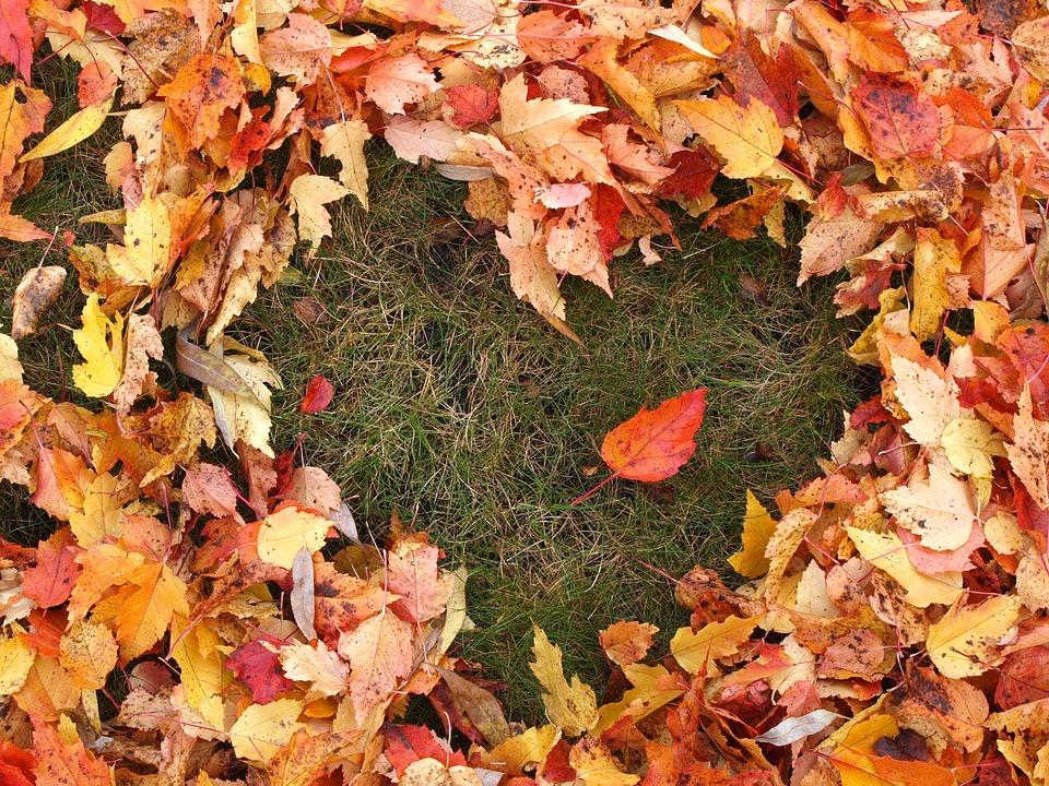 Free photo: Autumn, Love, Heart, Fallen Leaves - Free Image on ...