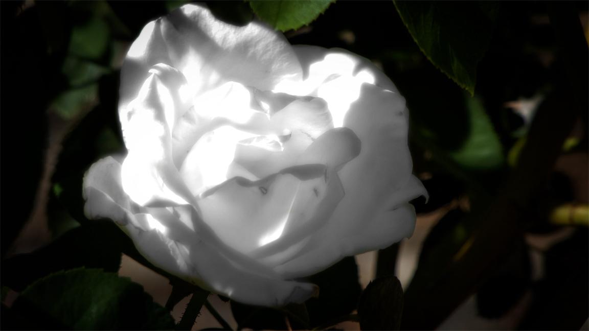 Dway White G.jpg