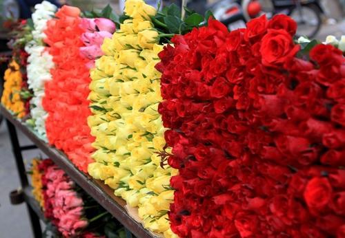 Kho lạnh bảo quản hoa - Giải pháp bảo quản hoa tươi hoàn hảo