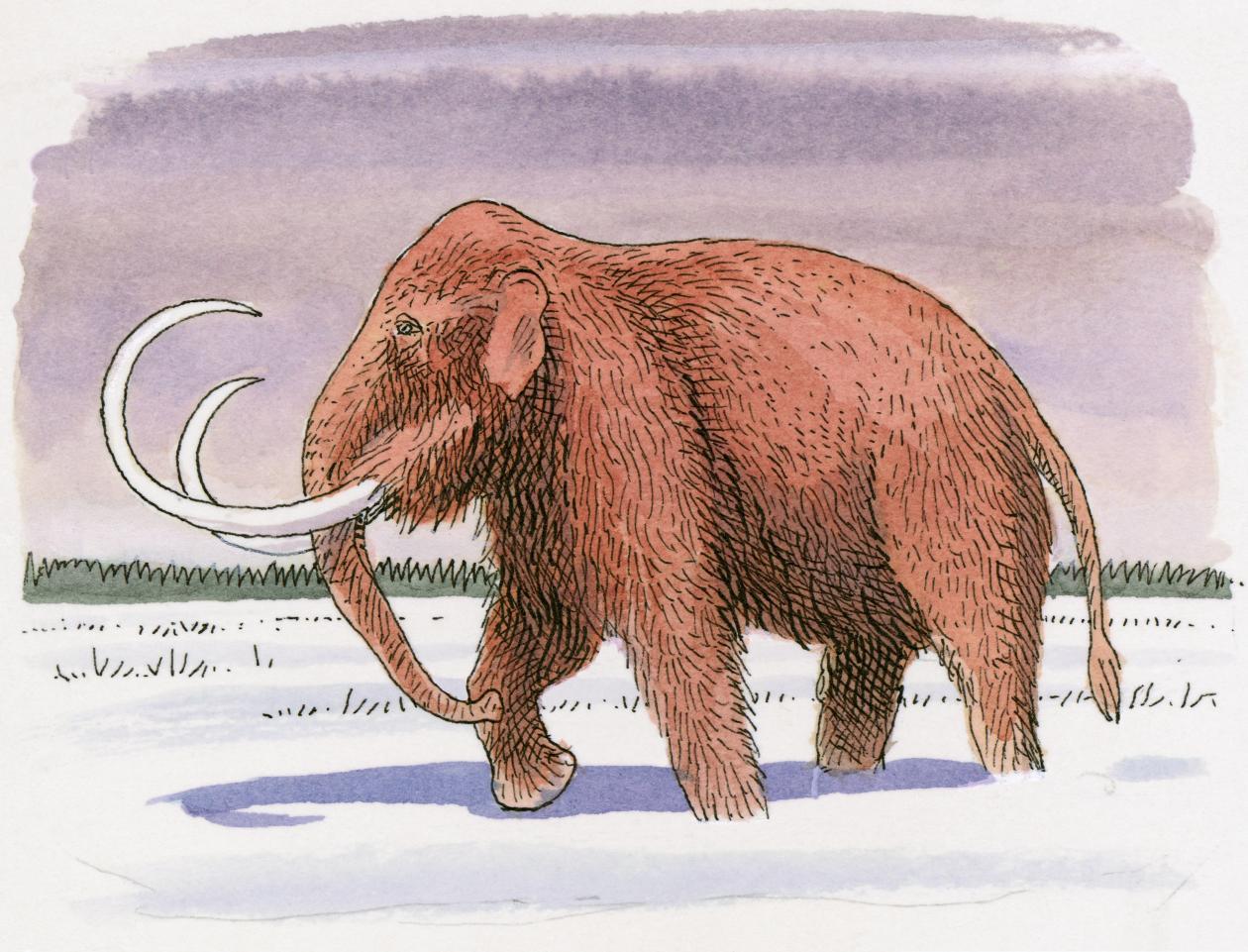 Resultado de imagen de mastodonte lanudo