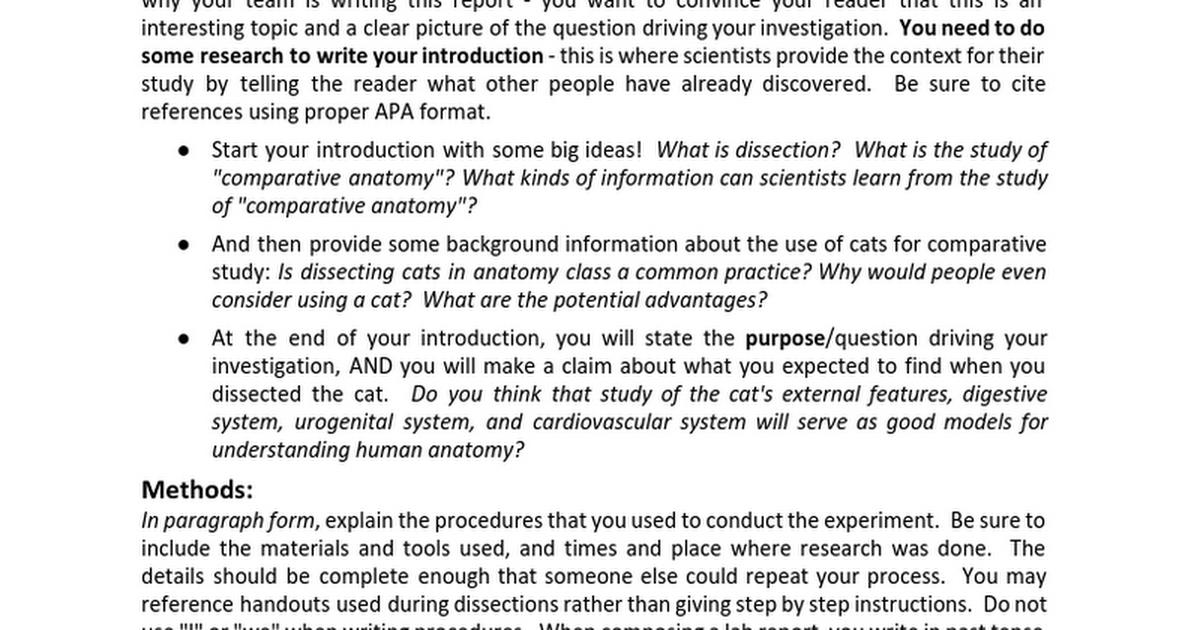 Cat Dissection Lab Report - Google Docs