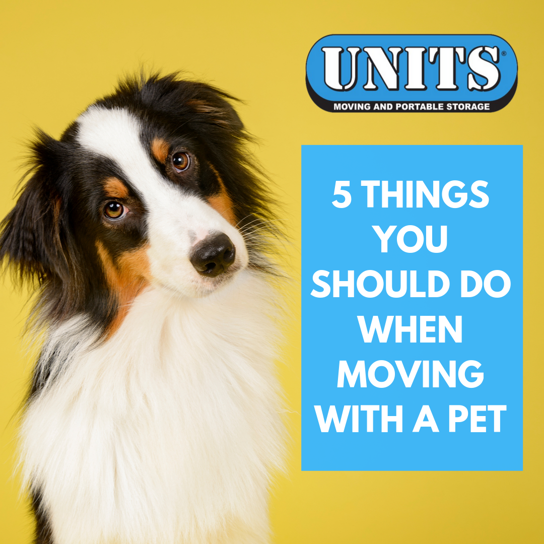 5 Things You Should Do When Moving With a Pet