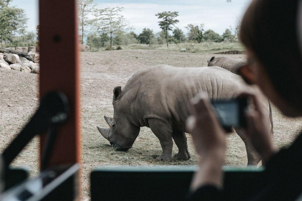 person inside vehicle capturing grey rhinoceros on ground during daytime