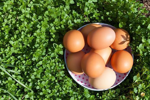 https://media.istockphoto.com/photos/eggs-on-grass-picture-id466806712?b=1&k=6&m=466806712&s=170667a&w=0&h=gruCtU-HDzH3531TDE-NohR6saYQlOuSPL552TQEqWk=
