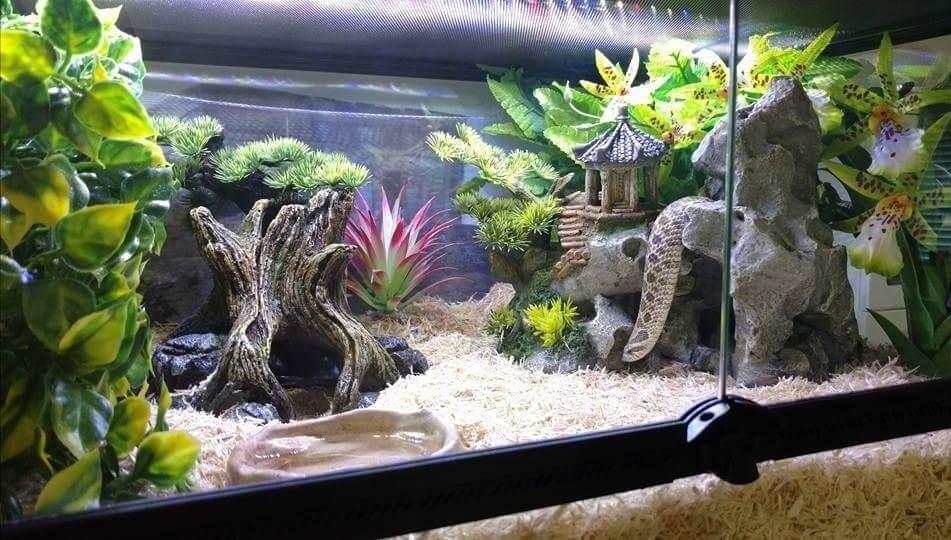 Image result for western hognose snake tank setup