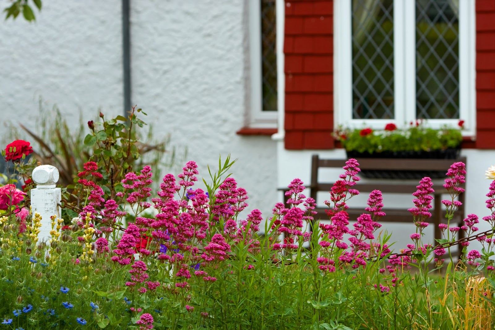flowers-in-cottage-garden.jpg