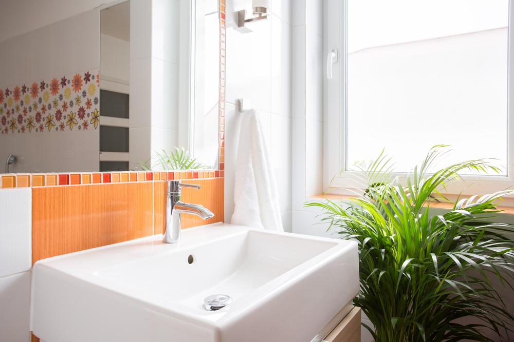 Ter plantas no banheiro é tendência: veja as melhores espécies para cultivar nesse espaço