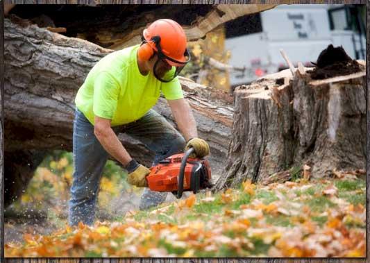 tree removal fredericksburg.jpg