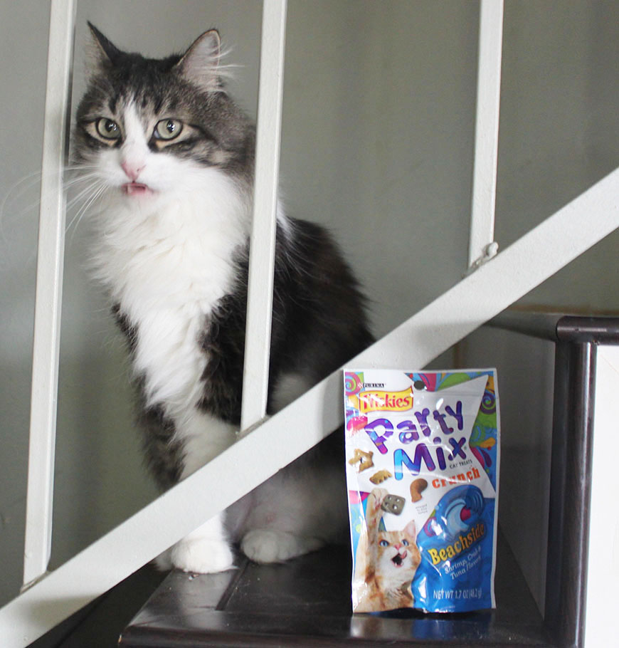 How to Pamper Your Cat on a Budget and Why My Cats are Spoiled Rotten 7.jpg