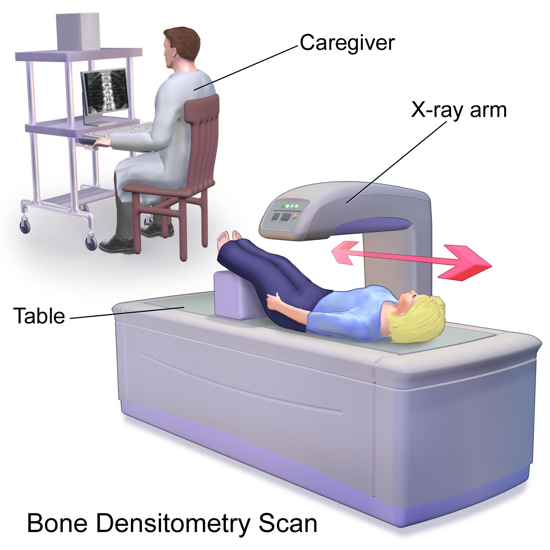 Blausen_0095_BoneDensitometryScan.png
