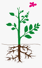 Part Png -parts Of Plants Png, Transparent Png, Png Download ...