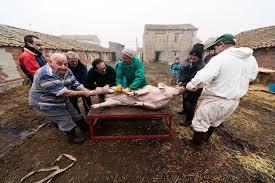 Resultado de imagen de san martin cerdo