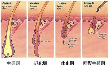 p.s怎麼維護健康的頭皮!! @ 東區Story Hair Mico :: 隨意窩Xuite日誌