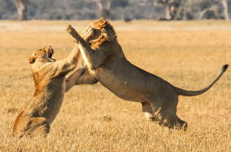 Imvelo_Safari_Lodges_-_Bomani_-__14_of_46.jpg