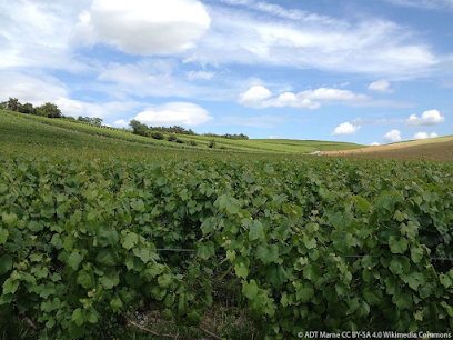 Geology' wine and culture: Jura' Bourgogne and Champagne